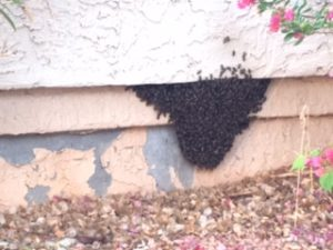 Beehive in a brick wall